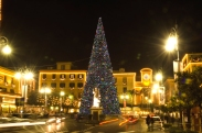 Tree in main piazza in Sorrento