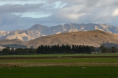 Classic beauty - Marlborough pasture and hills in the background