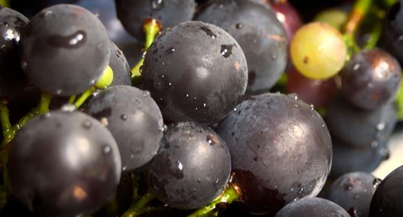 Grapes 2013