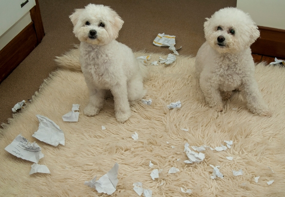 Which dog ate my homework?