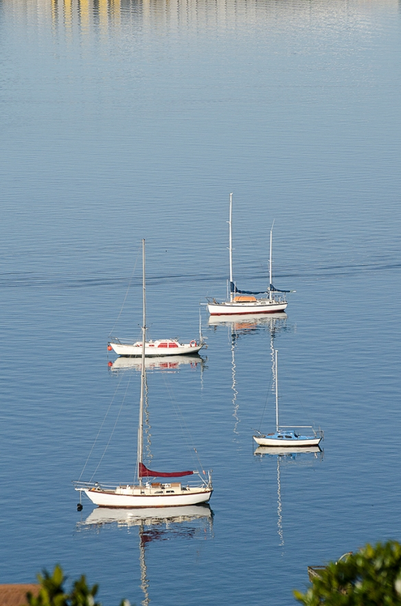 Yachts on Evans Bay - June 1, 2014