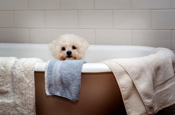 Bella in the bath