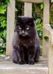 Rosie sitting on her bench in the garden