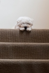 Puppy on stairs