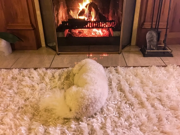 Poppie in front of the fire