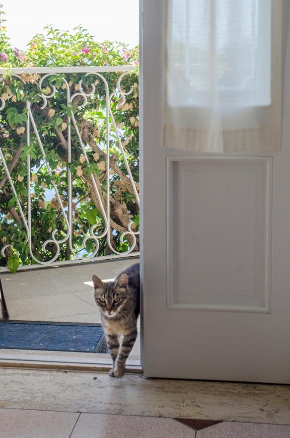 Villa cat