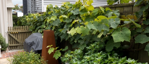Our shared grapevine
